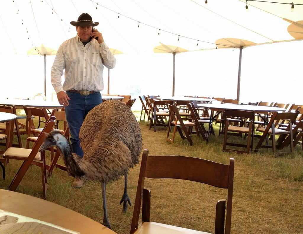 Texas Auto Writers Truck Rodeo Emu Snake Control